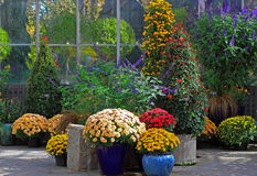Autumn Flower Display Stock Photos