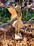 Autumn flower fairy, photographed in South Africa