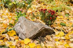 Autumn flower garden bed. Stone with red chrysanthemum. royalty free stock image