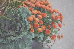 Autumn Flower Pot Arrangement lizenzfreies stockfoto