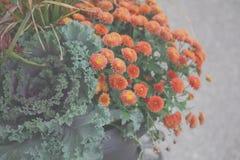 Autumn Flower Pot Arrangement royalty free stock photo