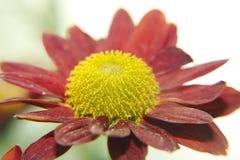 Autumn flower stock photography