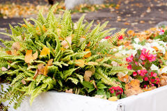 Autumn flowerbed Royalty Free Stock Image