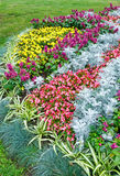 Autumn flowerbed composition Royalty Free Stock Photos