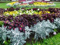 Autumn flowerbed composition Stock Photography