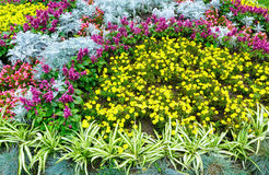 Autumn flowerbed composition Royalty Free Stock Photo