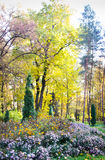 Autumn flowering park Royalty Free Stock Images