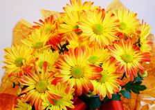 Autumn Flowers. Chrysanthemums For The Holiday Season Stock Photography