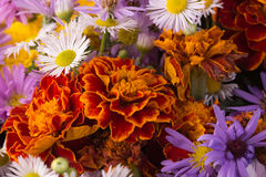 Autumn flowers. Background of bright autumn flowers Royalty Free Stock Photo