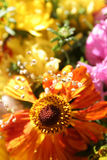 Autumn flowers. Colorful autumn bouquet Royalty Free Stock Photography
