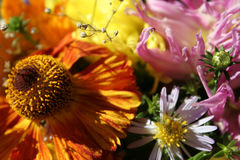 Autumn flowers. Colorful bouquet of autumn flowers Royalty Free Stock Image