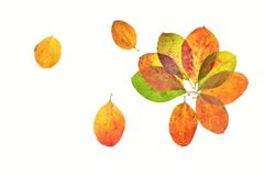 The autumn flowers Stock Images