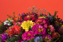 Autumn flowers. Background of bright autumn flowers Royalty Free Stock Images