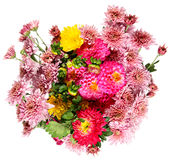 Autumn flowers Royalty Free Stock Photo