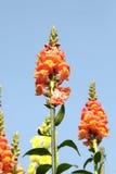Autumn Flowers against the backdrop of sky stock photos