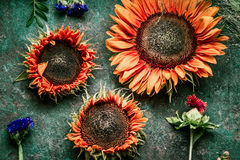 Autumn flowers arrangements made of red sunflowers on rustic vintage background , top view, place for text Royalty Free Stock Photos