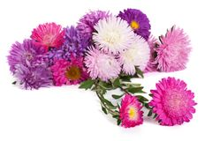 Autumn flowers asters isolated on white Royalty Free Stock Photos