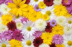 Autumn flowers background Royalty Free Stock Image