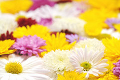Autumn flowers background Stock Photography