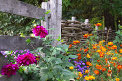 Autumn flowers. On the background of the fence Stock Images
