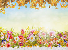 Autumn flowers background with white wooden terrace, blue sky and golden foliage Royalty Free Stock Image