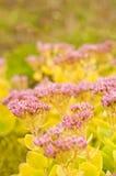 Autumn flowers Royalty Free Stock Image