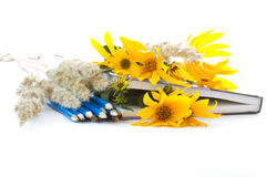 Autumn flowers with book and pencils Royalty Free Stock Photo