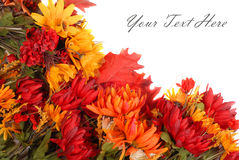 Autumn flowers border Stock Photography