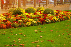 Autumn flowers in city park. Park in autumn day.Autumn colors city park. autumn flowers in city park. fallen leaves on the green grass. Grass lawn covered with Royalty Free Stock Images