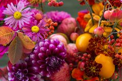 Autumn Flowers Closeup Background, Fall Flowers Bouquet With Dahlia Royalty Free Stock Photos
