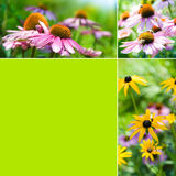 Autumn flowers collage Royalty Free Stock Photography