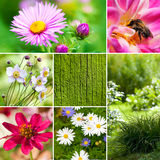 Autumn flowers collage Stock Photography