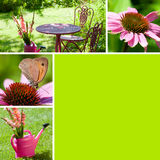 Autumn flowers collage Royalty Free Stock Image