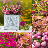 Autumn flowers collage Royalty Free Stock Photos