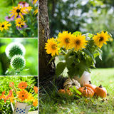 Autumn flowers collage Stock Images
