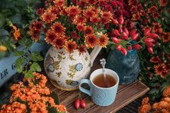 Autumn flowers with cup of tea royalty free stock photo
