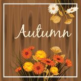 Autumn flowers, Fall, leaves, banner, greeting card, autumn colors, wooden backgfound, template, vector, illustration. Autumn flowers, Fall, leaves, banner vector illustration