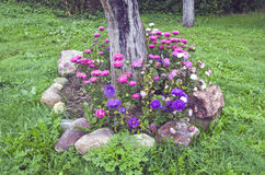 Autumn flowers in garden with stone and apple trunk Stock Photography