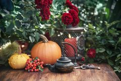 Autumn flowers and pumpkins decor. Autumn flowers from the garden, thanksgiving decor with candles and pumpkins stock photography