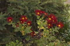 Autumn flowers stock photos