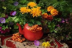 Autumn flowers outdoor. In the garden, thanksgiving decor royalty free stock images
