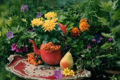 Autumn flowers outdoor decor. Autumn flowers outdoor in the garden, thanksgiving decor Royalty Free Stock Photos
