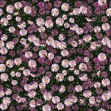 Autumn Flowers Pattern libre illustration