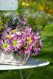 Autumn flowers Stock Image