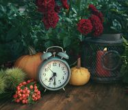 Autumn flowers and pumpkins decor. Autumn flowers from the garden, thanksgiving decor with alarm clock and pumpkins royalty free stock images