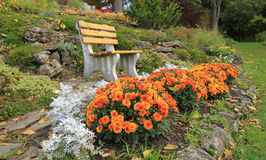 Autumn flowers in a rock-garden Ontario, Canada Stock Image