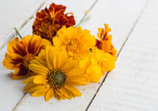 Autumn flowers on table Stock Image