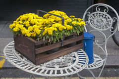 Autumn flowers in an wooden box Royalty Free Stock Image