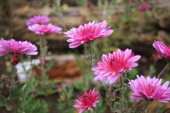 Flowers in autumn. Autumn flowers in the woods in the evening Royalty Free Stock Photography