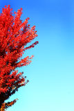 Autumn Flyer Background Royalty Free Stock Images